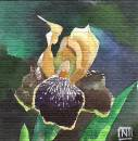 show  Iris by Nataliia Ignatiadi Click to find out more...
